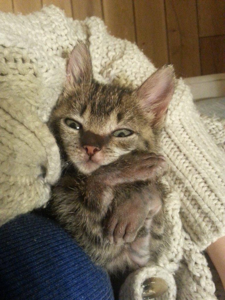 Kotka Hela wyzdrowiała dzięki opiece Ady Kanabus, wolontariuszki Schroniska na Paluchu.