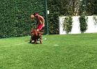 Leo Messi zagrał w piłkę ze swoim psem. Zwierzak nie miał szans [WIDEO]
