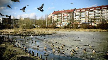 Oczko wodne przy ul. Wilczyńskiego w Olsztynie