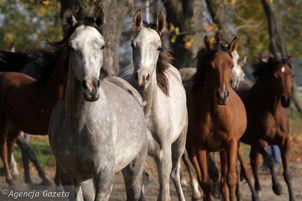 Stadnina koni wystawiona na sprzedaż
