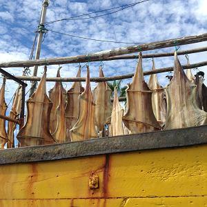 Kto nie był, niech jedzie. To raj. Przepyszne ryby i owoce. Cudowne krajobrazy. Kwiaty i zieleń. Madera jest miejscem, gdzie średnia temperatura roczna waha się od 17 do 23 stopni. Jak kiedyś w lutym spadła do 7, uznano to za klęskę żywiołową.  PS To zdjęcie suszących się na kutrze zębaczy zrobiłam w porcie rybackim Câmara de Lobos 20 listopada. Było pięknie, ale wkrótce po moim urlopie doszło do załamania pogody na Maderze - potężne ulewy spowodowały osunięcia się ziemi.