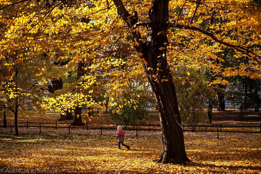 Złota jesień w Polsce (zdjęcie ilustracyjne)