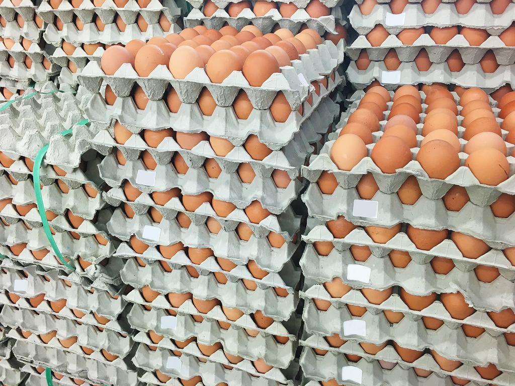 GIS: W jajach z Fermy Drobiu wykryto salmonellę. Których partii dotyczy wycofanie?