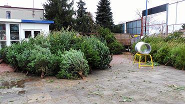 Stoisko z choinkami w Warszawie (zdjęcie ilustracyjne)