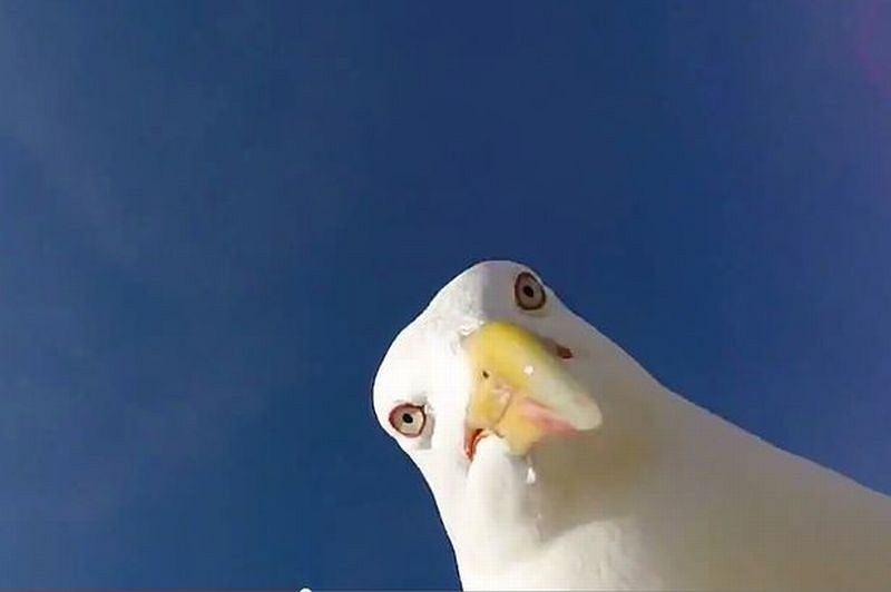 Selfie mewy