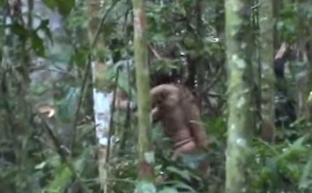 Mężczyzna odnaleziony w Puszczy Amazońskiej.