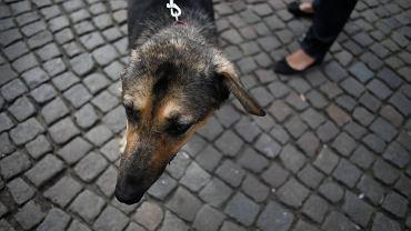 Porzucenie może być traktowane jako znęcanie się nad zwierzętami.
