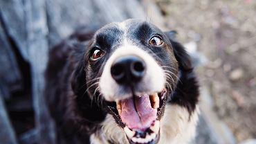 Imiona dla psa. Jakie imię wyrazi charakter naszego przyjaciela?