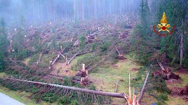 Powalone drzewa niedaleko Belluno w północno-wschodnich Włoszech