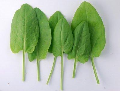 Szczaw spożywany w nadmiarze może szkodzić zdrowiu.