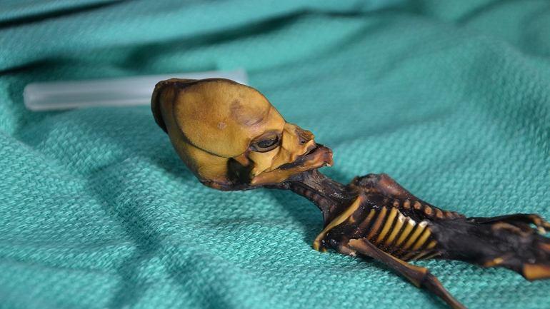Szkielet Aty, znaleziony na pustyni Atacama. Mierzy ledwie 15 cm