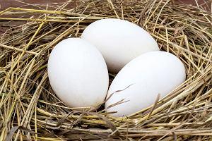 Jaja gęsie: właściwości. Dlaczego dietetycy polecają gęsie jaja