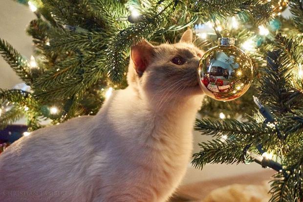 Choinka W Domu Gdzie Jest Kot