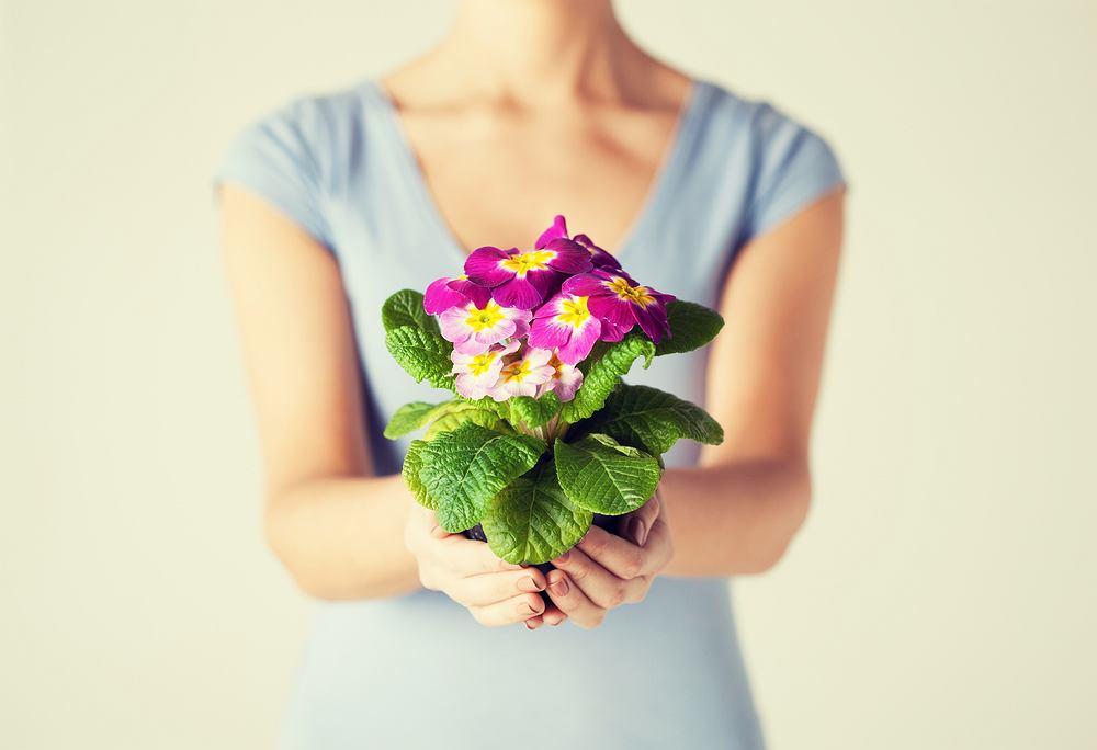 Kwiaty na imieniny - rośliny doniczkowe. Zdjęcie ilustracyjne