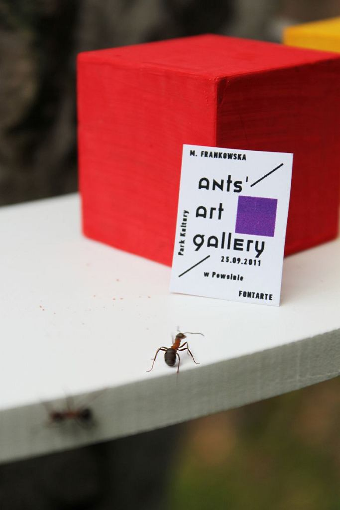 Magdalena Frankowska (Fontarte), plakat i instalacja Galeria sztuki dla mrówek / Materiały prasowe