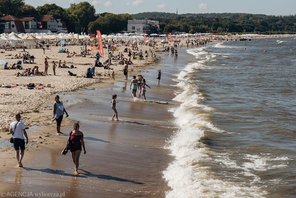 Sinice w Bałtyku. Plaża w Sopocie