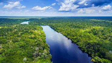 Kolejnym źródłem koronawirusów może być Amazonia, gdzie zniszczyliśmy równowagę ekologiczną