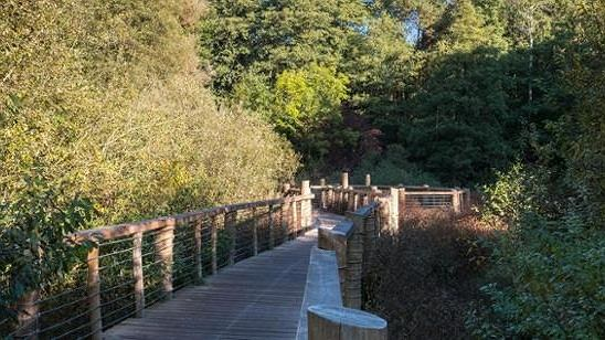 Okolice rezerwatu Łosiowe Błota
