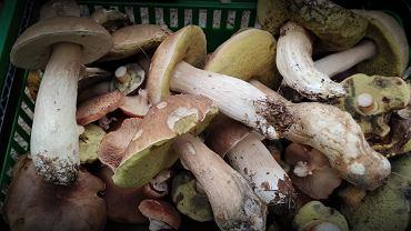 Od kiedy dzieci mogą jeść grzyby? Wiele osób popełnia błąd