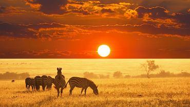 Tanzania - Park Narodowy Serengeti