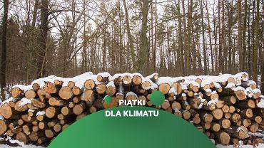 21 marca odbędzie się Ogólnopolska Akcja Inicjatyw Społecznych 'Chodźmy do lasu'