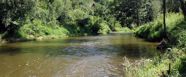 Z rzeki wyłowiono ludzkie nogi. Służby poszukują pozostałych części ciała