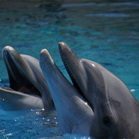 serwis randkowy z delfinem