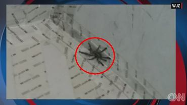 Tarantula na pokładzie samolotu linii Delta w USA