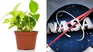 Rośliny, które najskuteczniej oczyszczają powietrze