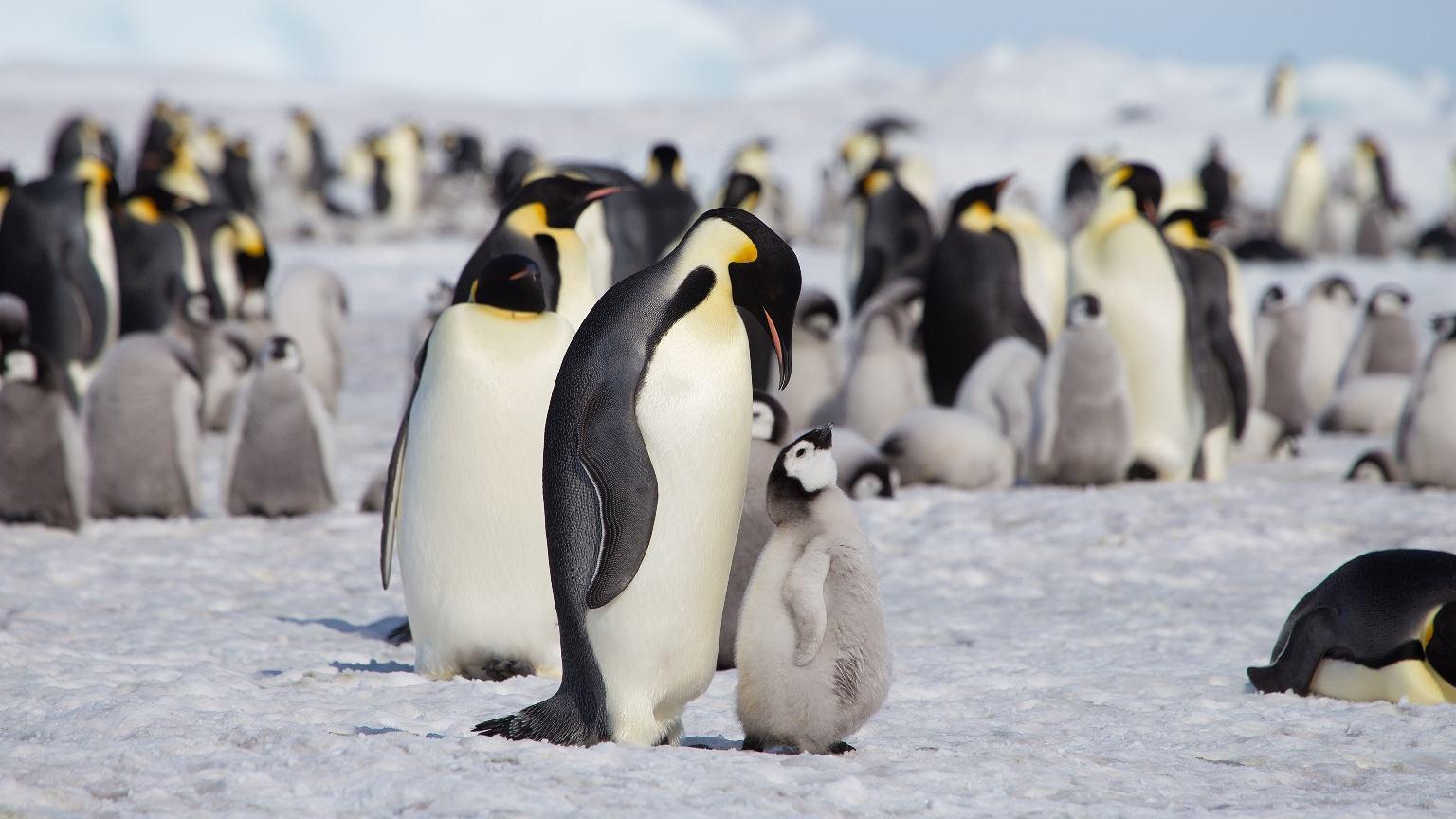 Zwierzęta w naturalny sposób kooperują ze sobą, budują stosunki zaufania i sieci wsparcia