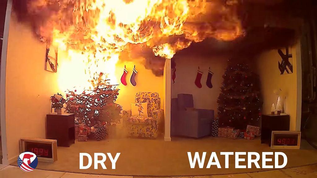 Sucha choinka całkowicie zajmie się ogniem po niecałej minucie.