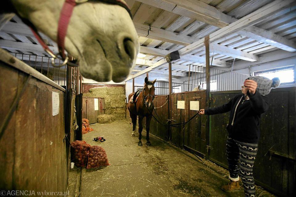 Zdjęcie numer 5 w galerii - Konie klubu jeździeckiego mają zostać zlicytowane. Czy zwierzęta trafią do rzeźni?