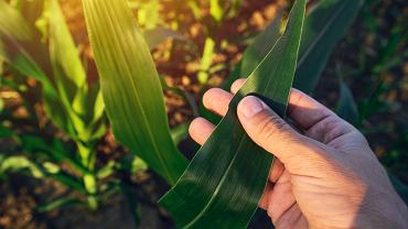 Zmniejszenie ingerencji w naturę to kluczowy element strategii Bonduelle - lidera warzyw apertyzowanych