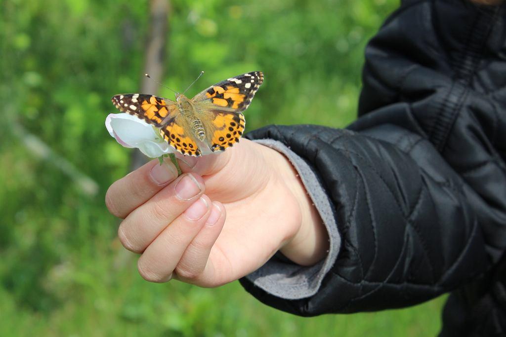 Dzieci mają stały kontakt z przyrodą (fot. Ania Oka)