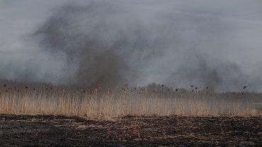 Pożar w Biebrzańskim Parku Narodowym. Wyznaczono 10 tys. zł nagrody za wskazanie podpalacza