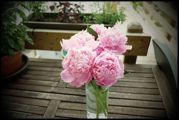 Wsadź sobie w nos te kwiatki, kłótliwy bucu!