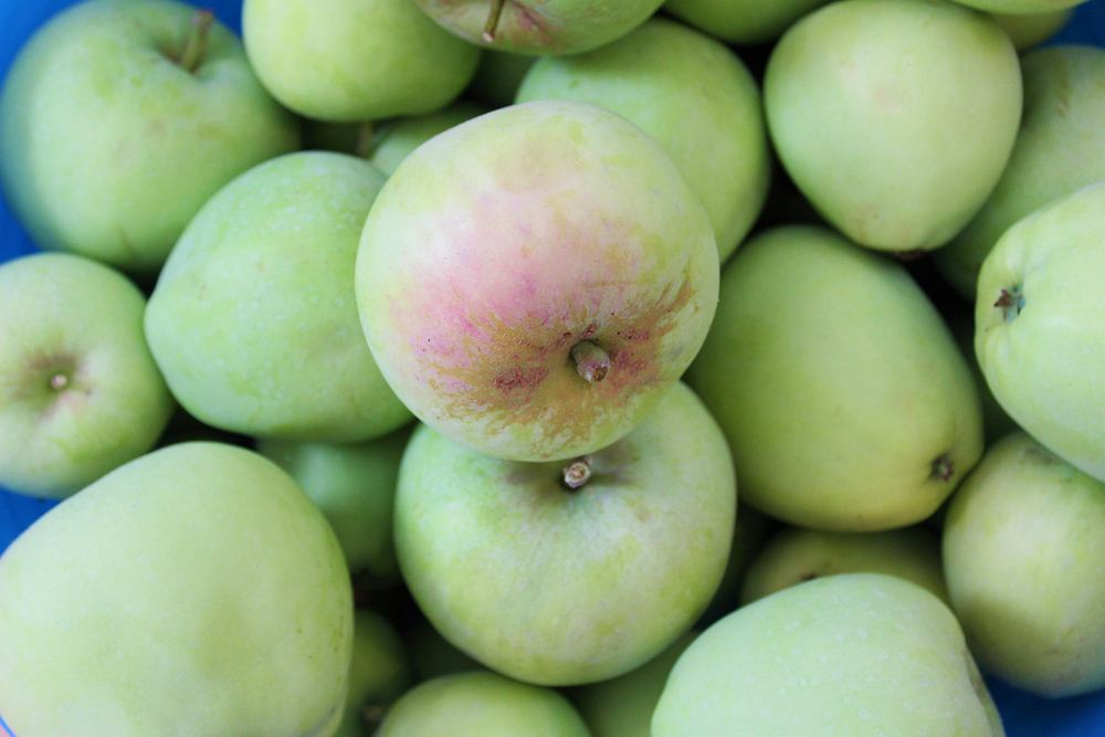Jabłka w słoikach na zimę najlepiej robić z odmian: szara reneta, gloster, lobo, papierówka i antonówka