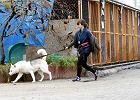 Wyższe mandaty i podatek dla właścicieli psów. Nowe przepisy wchodzą w życie w najbliższą sobotę