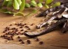 Karob: dla nietolerujących glutenu i maniaków zdrowego odżywiania?