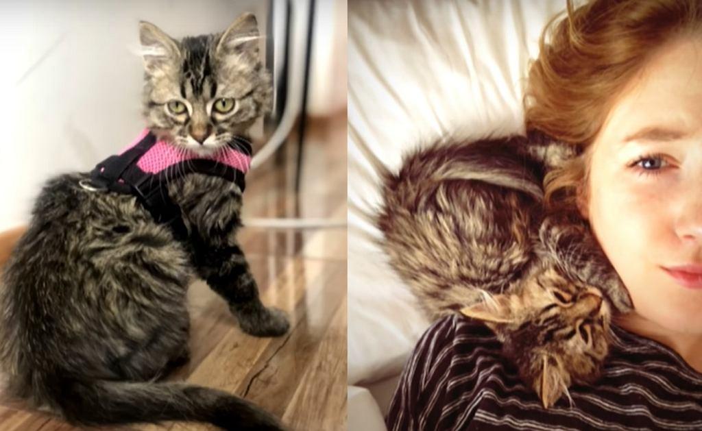 Belgia. Studentka przemyciła kota wracając z Peru. Sąd zdecydował, że zwierzak nie zostanie uśpiony