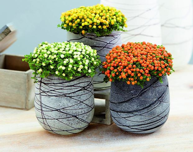 Rośliny owocowe w domu
