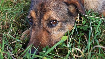 W Galerii Sfera II w Bielsku-Białej zainaugurowano akcję DOMDLAPSA, którą prowadzi grupa wolontariuszy działająca przy bielskim Miejskim Schronisku dla Bezdomnych Zwierząt 'Reksio'. Partnerami akcji są: Galeria Sfera oraz Fundacja Ekologiczna Arka. Otwarto wystawę promującą adopcję psów z bielskiego schroniska. Na pięknych zdjęciach Marty Lelek przedstawionych jest 11 psów, dla których wolontariuszki szukają nowych domów. Pierwsza edycja akcji potrwa do końca maja. 29 maja odbędzie się kolejny Charytatywny Kiermasz Zabawek, z których dochód przeznaczony będzie właśnie na inicjatywę DOMDLAPSA.  W ramach wystawy fotograficznej przedstawiane wybrane psy ze schroniska w Bielsku-Białej, psy niemłode, takie, z których większość już długo czeka na nowy dom. - Niestety ludzie na ogół chcą psa młodego. Jednocześnie takiego, który nie zniszczy im mieszkania, nie będzie ciągnął na smyczy i generalnie najchętniej będzie leżał na kanapie. Tymczasem młode psy rzadko spełniają te oczekiwania. Starsze tak i właśnie takie polecamy Państwu do adopcji, mając nadzieję, że zdołają zaznać ludzkiej opieki i miłości, zanim ich życie się zakończy - mówią wolontariuszki.