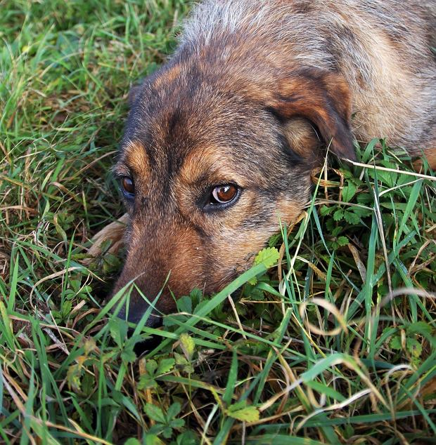 Zdjęcie numer 0 w galerii - Starsze psy z bielskiego schroniska szukają domów [ZDJĘCIA]