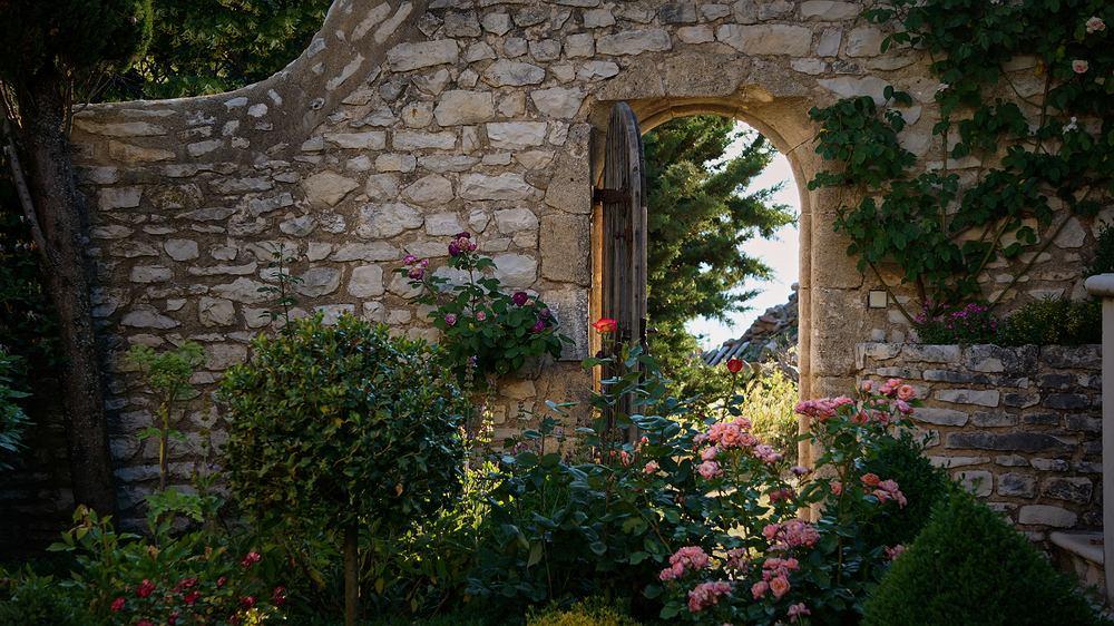 Rośliny do ogrodu. Zdjęcie ilustracyjne
