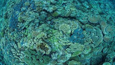 Zdrowa rafa koralowa.