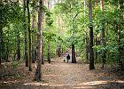 Koronawirus. Czy podczas epidemii można iść na spacer do lasu?