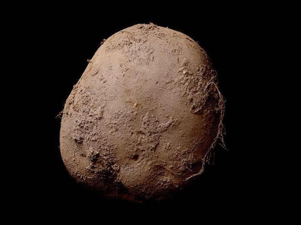 Fotografia ziemniaka sprzedana za milion dolarów