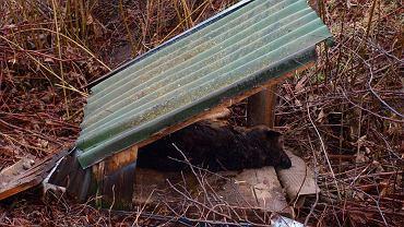 Skatowany pies wyrzucony do rowu razem z budą