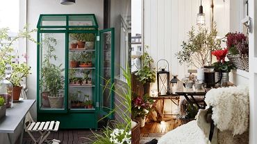 Zimowy ogród na balkonie