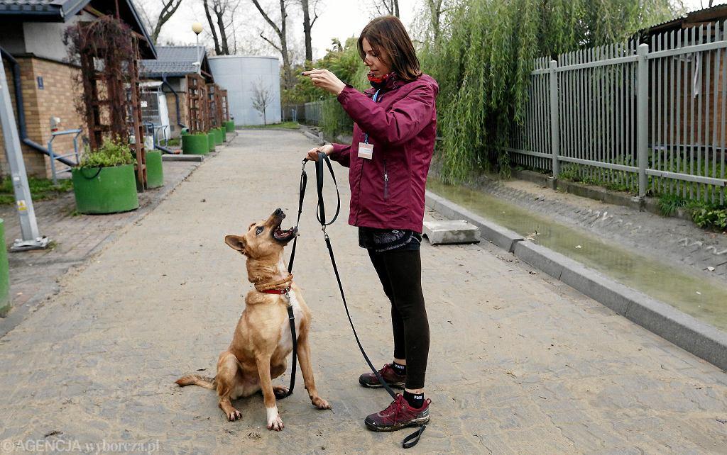 Schronisko Na Paluchu. Wolontariuszka Karolina Mikołajczyk z psem Sendi